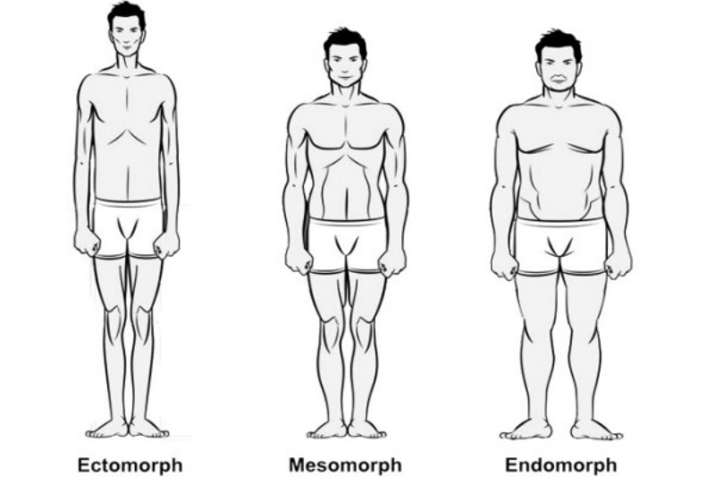 The three somatotypes, showing the relationship between somatotype and body fat