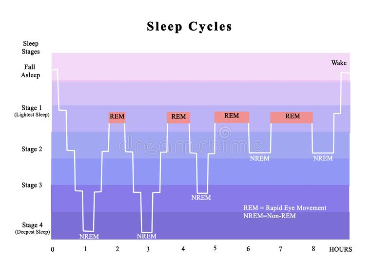 chart showing the different stages of the sleep cycle