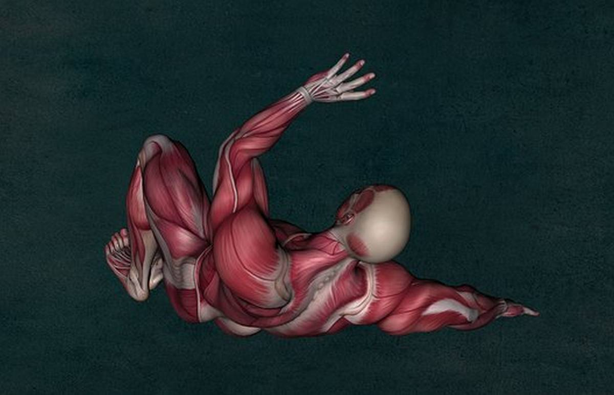 Image of man showing muscles under skin. We give you ten reasons why you need muscle