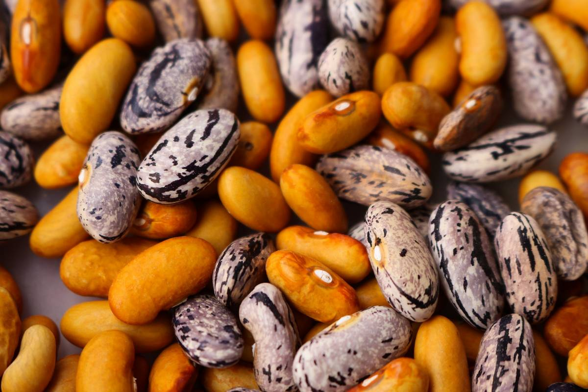 A close up of some beans, some variegated.